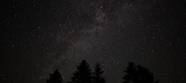 Forest Night Sky Spruce Trees Stars [CC BY-SA 3.0 us], via Wikimedia Commons