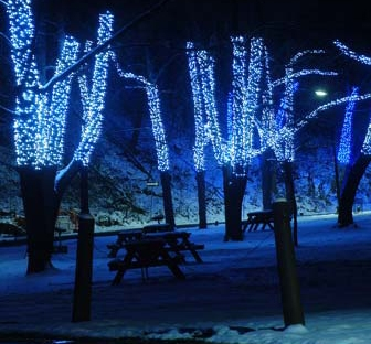 Large Birch Tree With White Lights